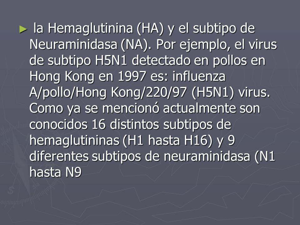 la Hemaglutinina (HA) y el subtipo de Neuraminidasa (NA). Por ejemplo, el virus de subtipo H5N1 detectado en pollos en Hong Kong en 1997 es: influenza