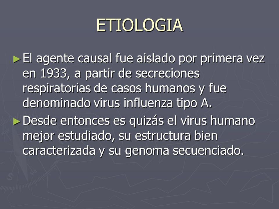 ETIOLOGIA El agente causal fue aislado por primera vez en 1933, a partir de secreciones respiratorias de casos humanos y fue denominado virus influenz