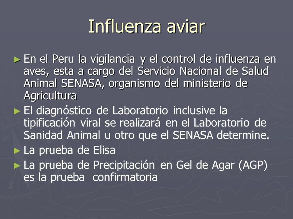 Influenza aviar En el Peru la vigilancia y el control de influenza en aves, esta a cargo del Servicio Nacional de Salud Animal SENASA, organismo del m