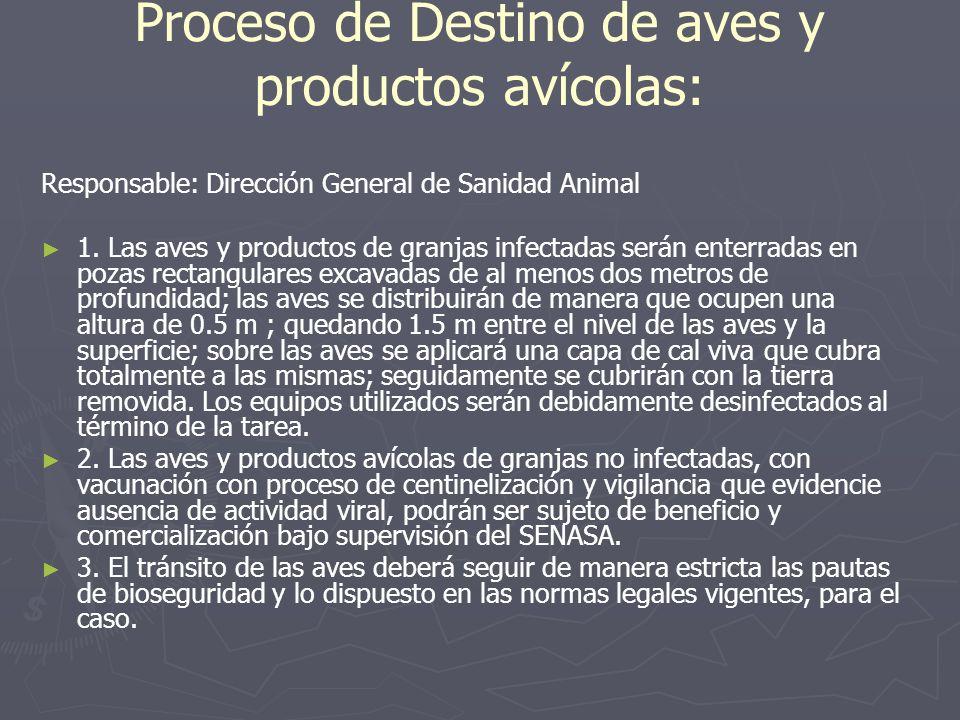 Proceso de Destino de aves y productos avícolas: Responsable: Dirección General de Sanidad Animal 1. Las aves y productos de granjas infectadas serán