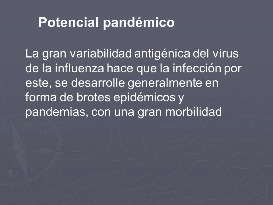 Potencial pandémico La gran variabilidad antigénica del virus de la influenza hace que la infección por este, se desarrolle generalmente en forma de b