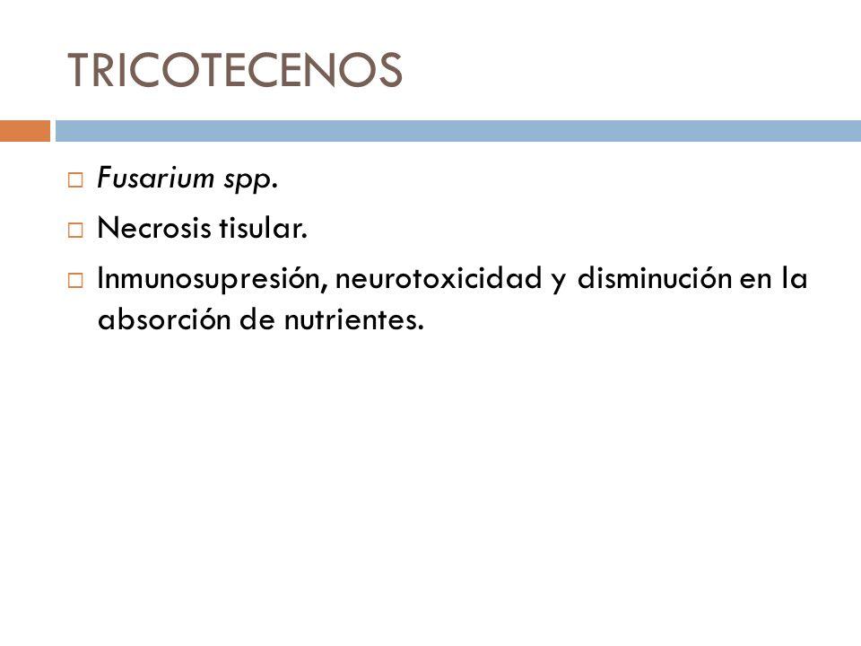 TRICOTECENOS Fusarium spp. Necrosis tisular. Inmunosupresión, neurotoxicidad y disminución en la absorción de nutrientes.