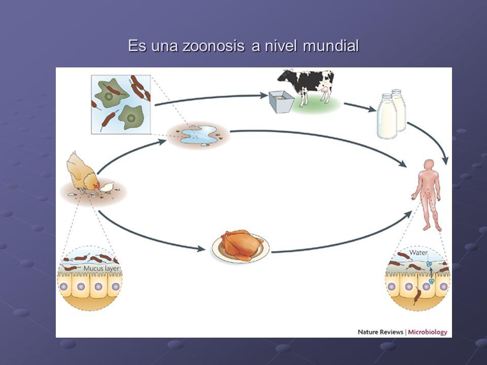 Es una zoonosis a nivel mundial