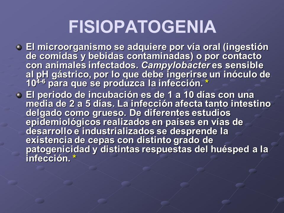 FISIOPATOGENIA El microorganismo se adquiere por vía oral (ingestión de comidas y bebidas contaminadas) o por contacto con animales infectados. Campyl