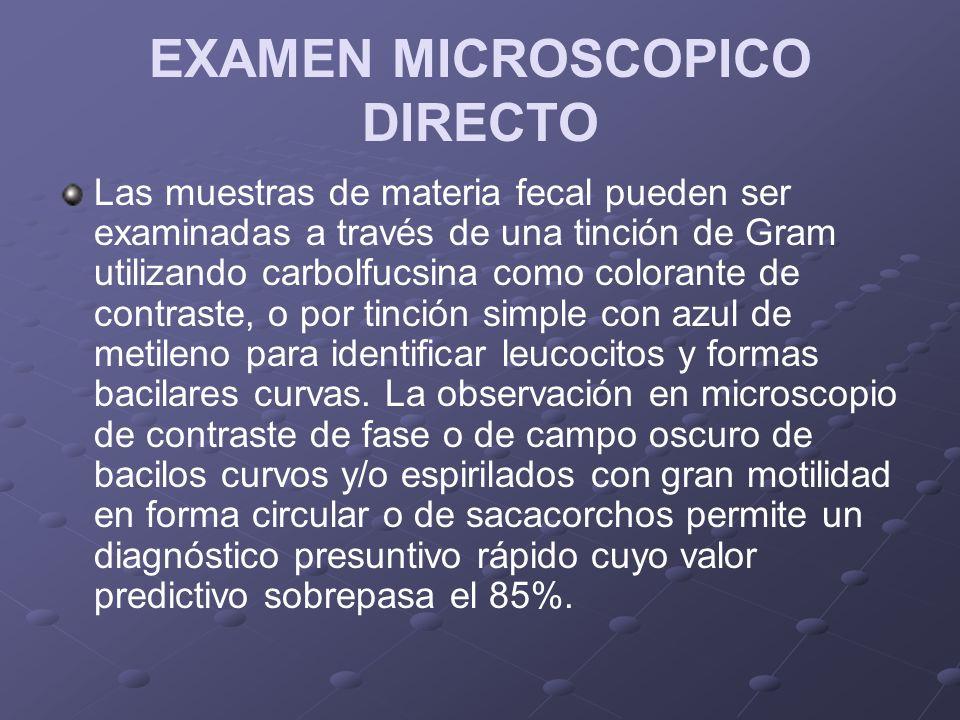 EXAMEN MICROSCOPICO DIRECTO Las muestras de materia fecal pueden ser examinadas a través de una tinción de Gram utilizando carbolfucsina como colorante de contraste, o por tinción simple con azul de metileno para identificar leucocitos y formas bacilares curvas.