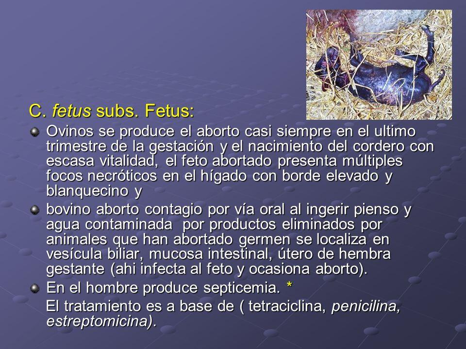 C. fetus subs. Fetus: Ovinos se produce el aborto casi siempre en el ultimo trimestre de la gestación y el nacimiento del cordero con escasa vitalidad