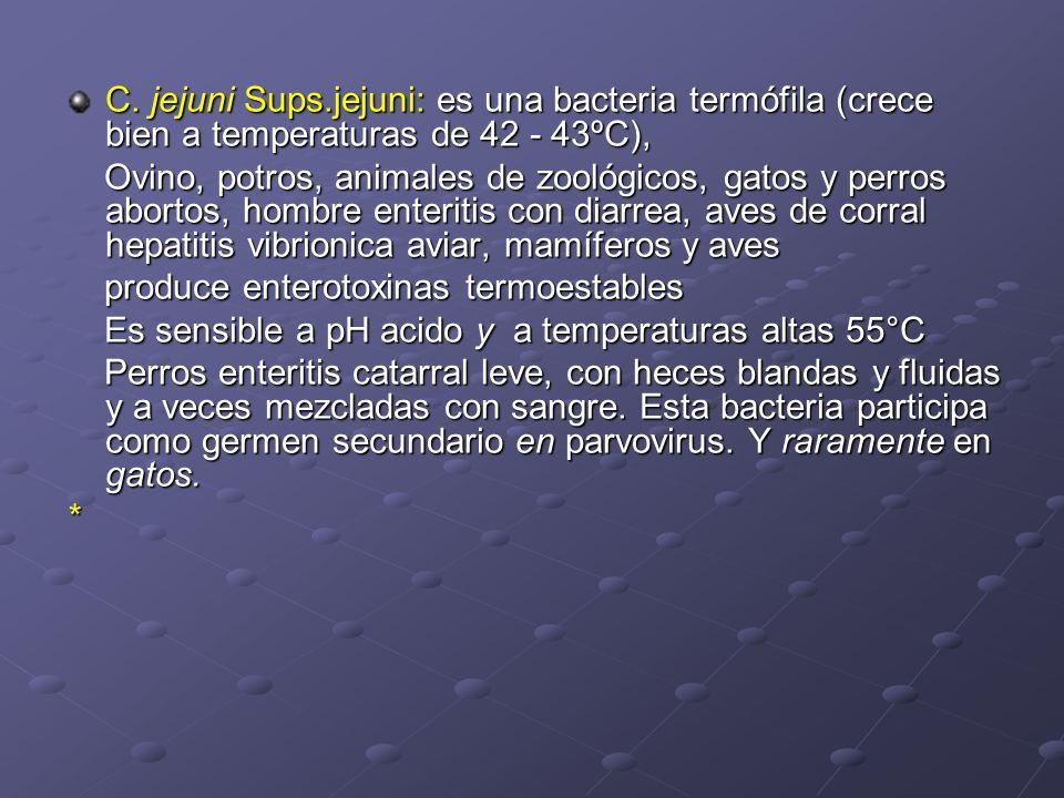 C. jejuni Sups.jejuni: es una bacteria termófila (crece bien a temperaturas de 42 - 43ºC), Ovino, potros, animales de zoológicos, gatos y perros abort