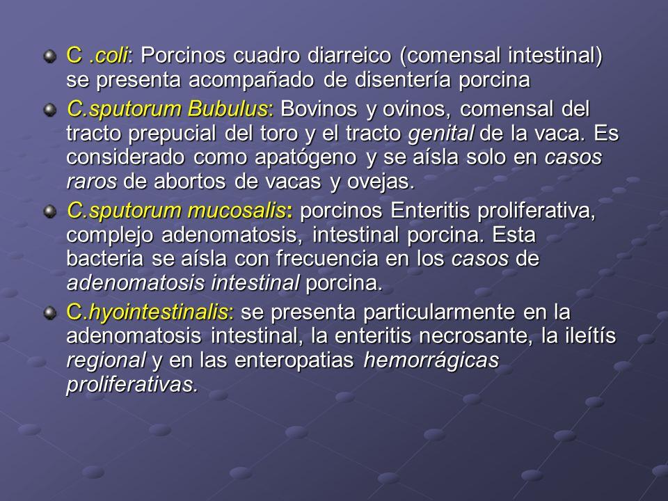 C.coli: Porcinos cuadro diarreico (comensal intestinal) se presenta acompañado de disentería porcina C.sputorum Bubulus: Bovinos y ovinos, comensal de