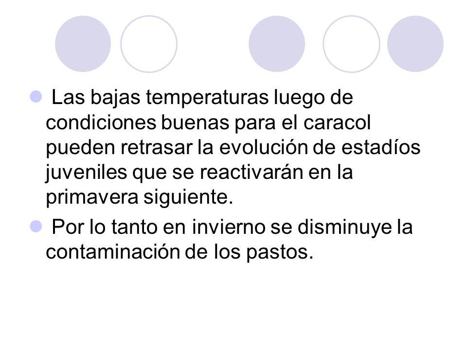 Las bajas temperaturas luego de condiciones buenas para el caracol pueden retrasar la evolución de estadíos juveniles que se reactivarán en la primave