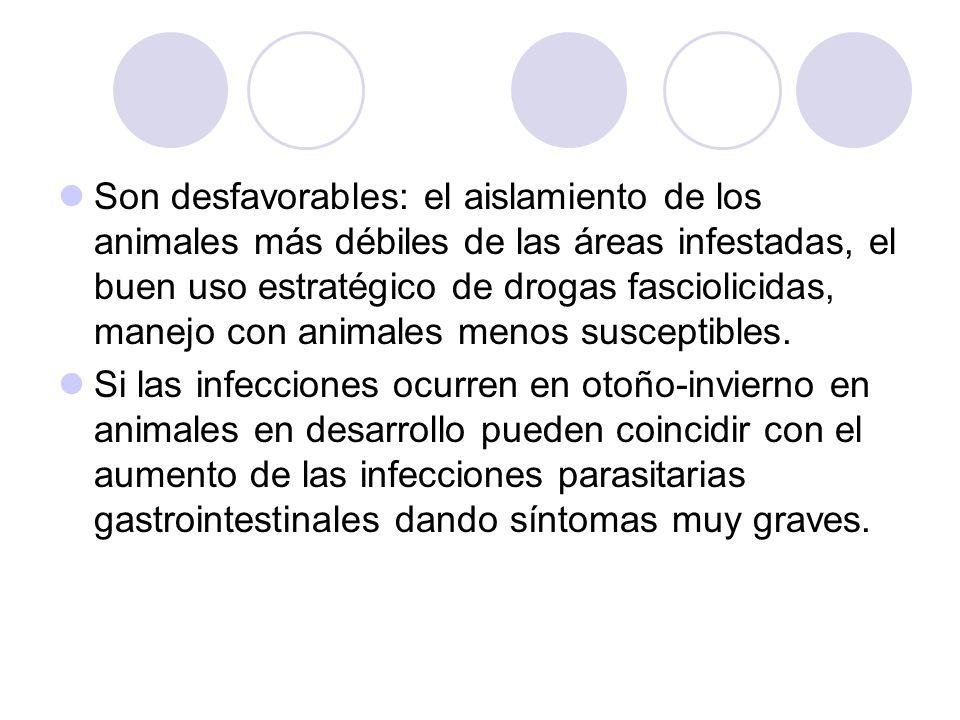 Son desfavorables: el aislamiento de los animales más débiles de las áreas infestadas, el buen uso estratégico de drogas fasciolicidas, manejo con ani