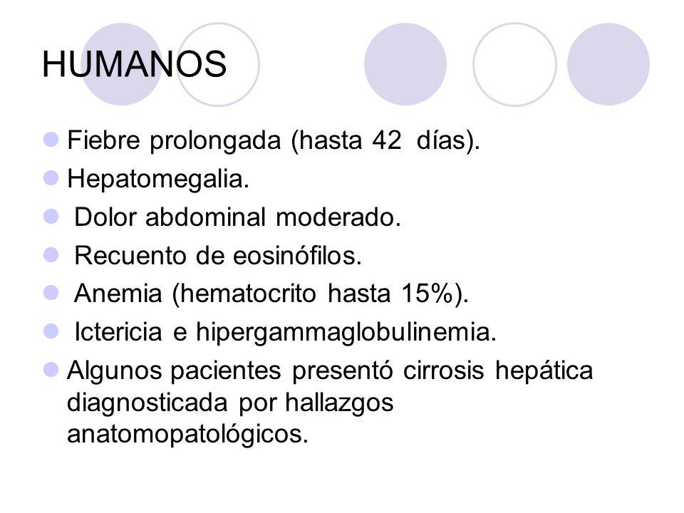 HUMANOS Fiebre prolongada (hasta 42 días). Hepatomegalia. Dolor abdominal moderado. Recuento de eosinófilos. Anemia (hematocrito hasta 15%). Ictericia