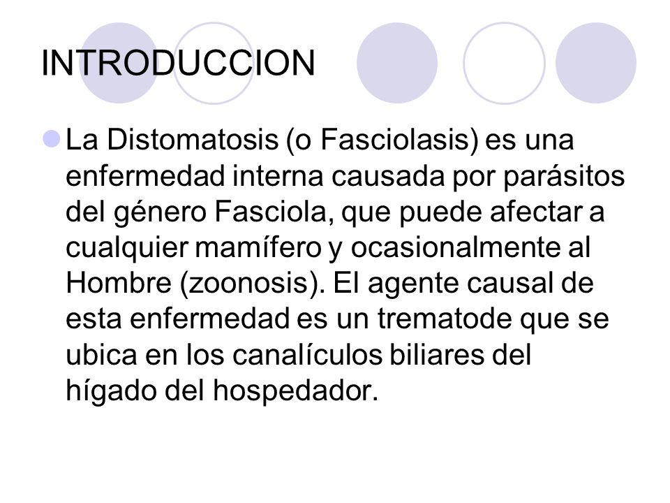 ETIOLOGIA Taxonómicamente se clasifica al agente causal de la Distomatosis de la siguiente manera: Phylum: Platyhelminthes Clase: Trematoda Orden: Digenea Familia: Fasciolidae Género: Fasciola Especie: Fasciola hepatica y Fasciola gigantica