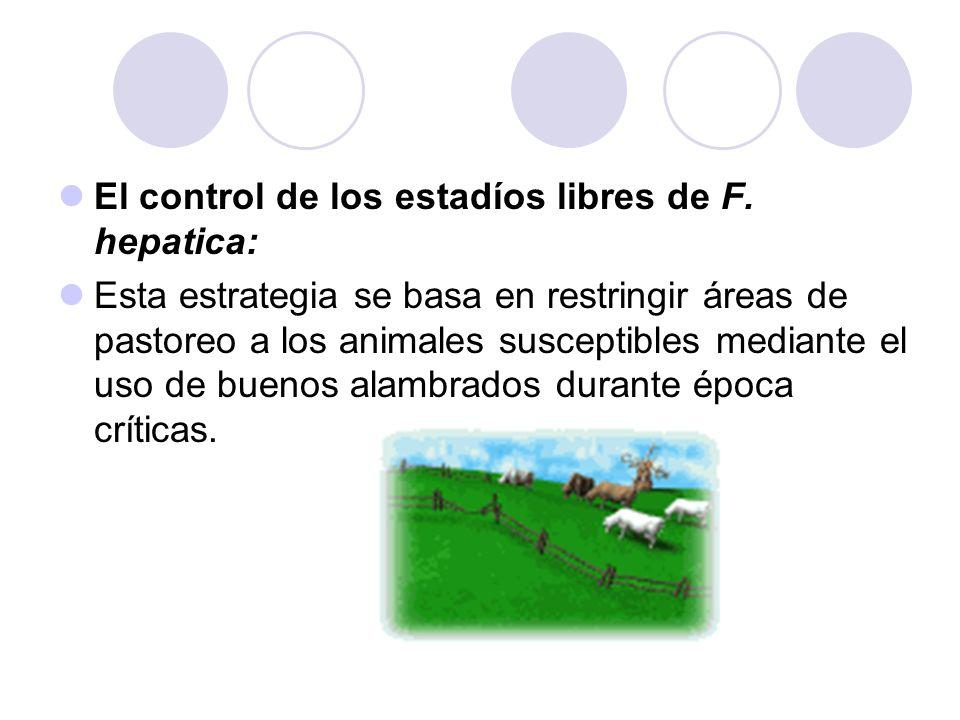 El control de los estadíos libres de F. hepatica: Esta estrategia se basa en restringir áreas de pastoreo a los animales susceptibles mediante el uso