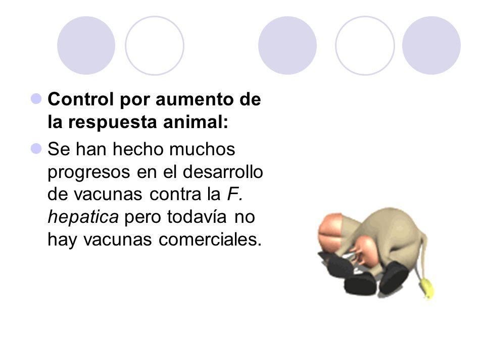 Control por aumento de la respuesta animal: Se han hecho muchos progresos en el desarrollo de vacunas contra la F. hepatica pero todavía no hay vacuna