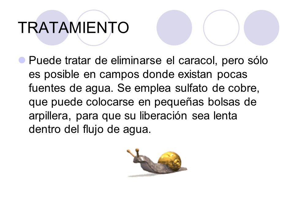 TRATAMIENTO Puede tratar de eliminarse el caracol, pero sólo es posible en campos donde existan pocas fuentes de agua. Se emplea sulfato de cobre, que