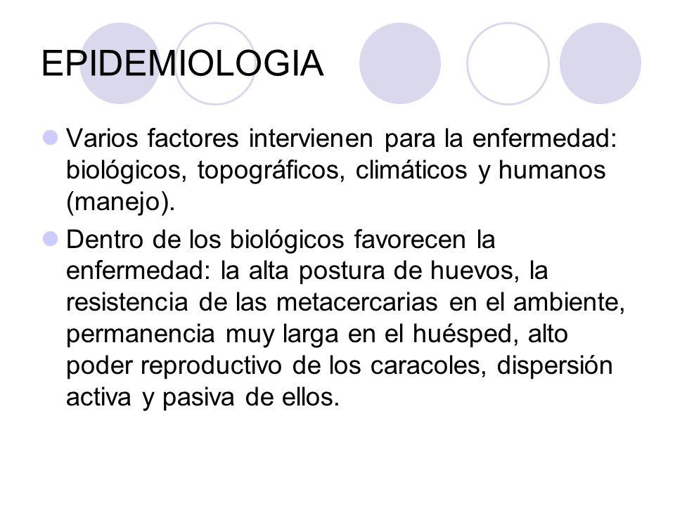 EPIDEMIOLOGIA Varios factores intervienen para la enfermedad: biológicos, topográficos, climáticos y humanos (manejo). Dentro de los biológicos favore