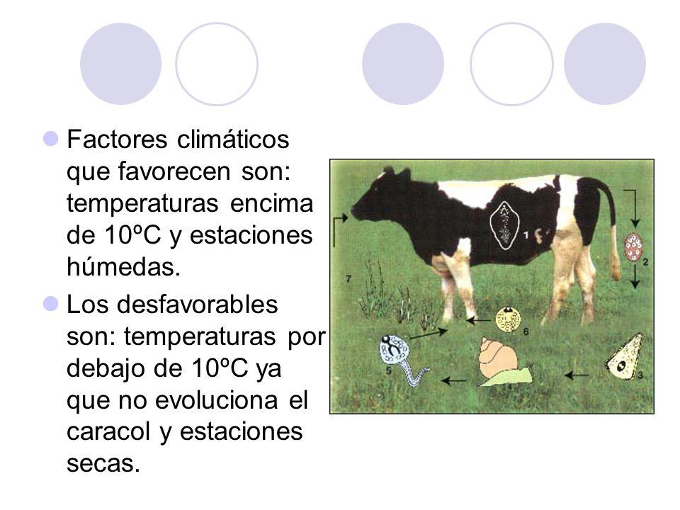 CONTROL Control sobre parásitos en el animal: Se busca matar los estadíos adultos y en casos muy graves y/o en animales jóvenes también los estadíos juveniles.