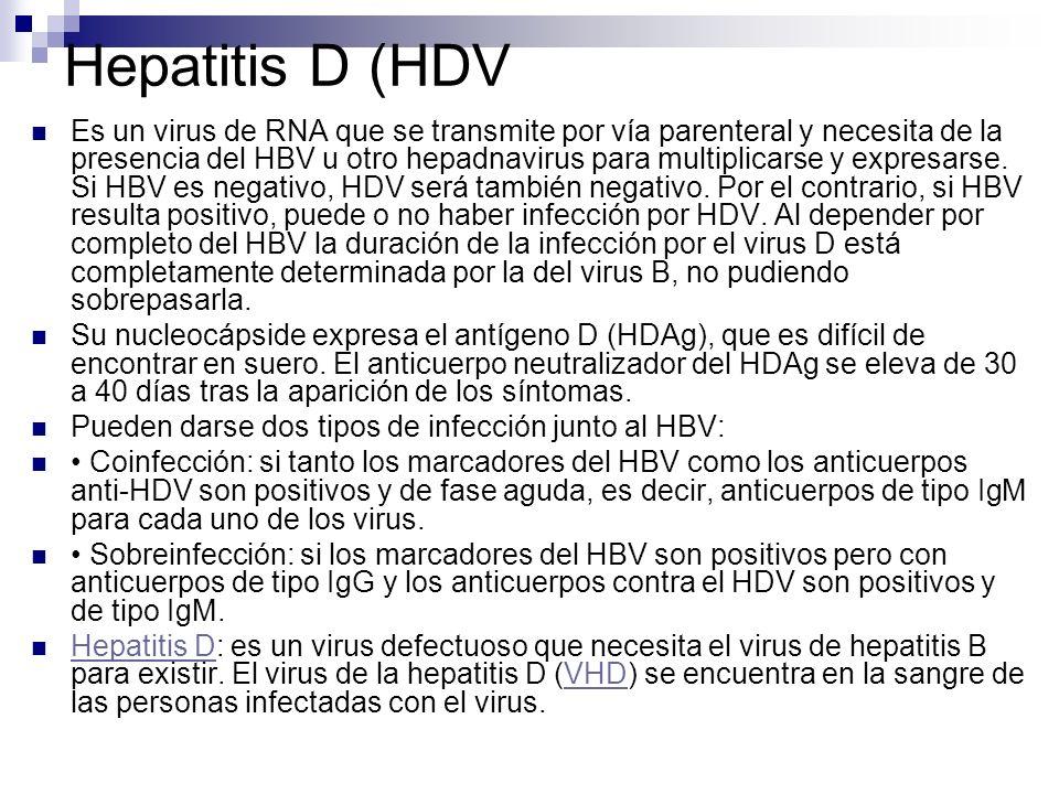 Hepatitis D (HDV Es un virus de RNA que se transmite por vía parenteral y necesita de la presencia del HBV u otro hepadnavirus para multiplicarse y ex
