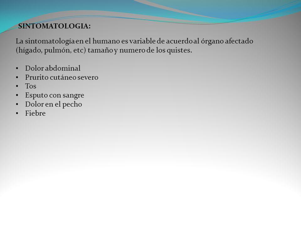SINTOMATOLOGIA: La sintomatología en el humano es variable de acuerdo al órgano afectado (hígado, pulmón, etc) tamaño y numero de los quistes. Dolor a