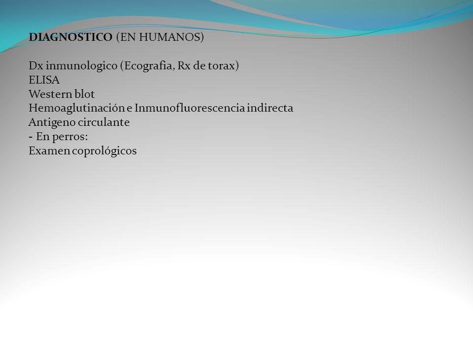 DIAGNOSTICO (EN HUMANOS) Dx inmunologico (Ecografia, Rx de torax) ELISA Western blot Hemoaglutinación e Inmunofluorescencia indirecta Antigeno circula