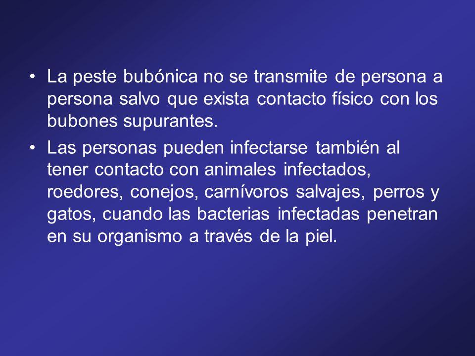 La peste bubónica no se transmite de persona a persona salvo que exista contacto físico con los bubones supurantes. Las personas pueden infectarse tam
