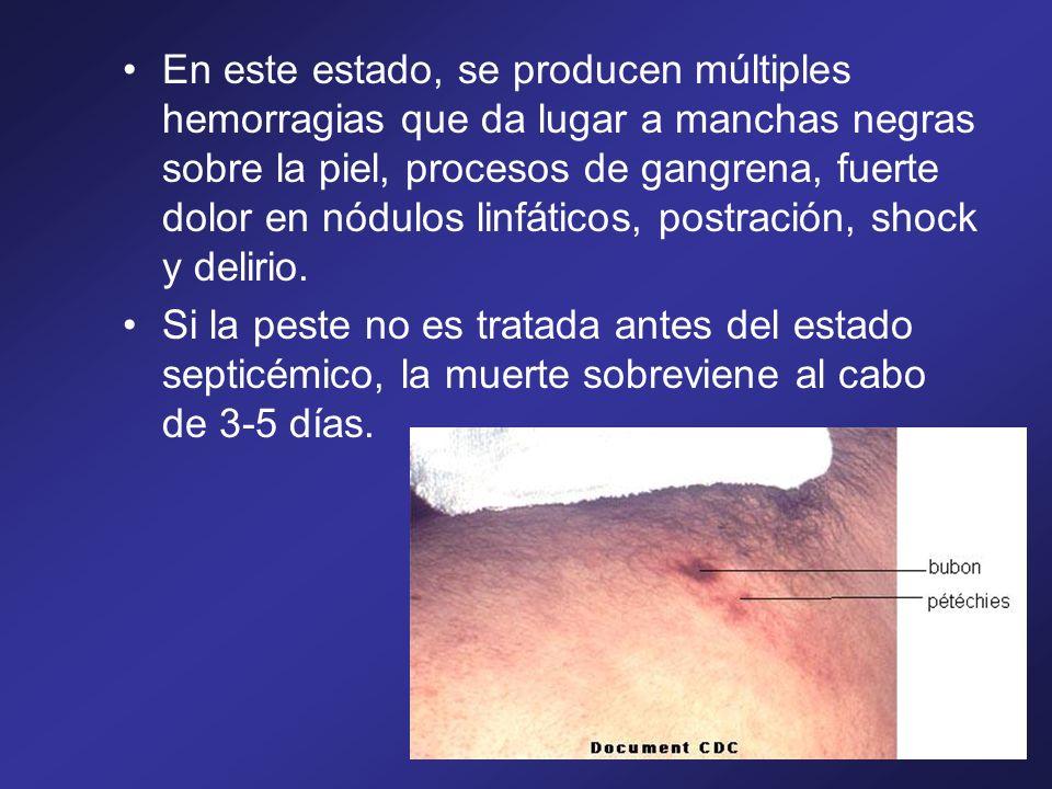En este estado, se producen múltiples hemorragias que da lugar a manchas negras sobre la piel, procesos de gangrena, fuerte dolor en nódulos linfático
