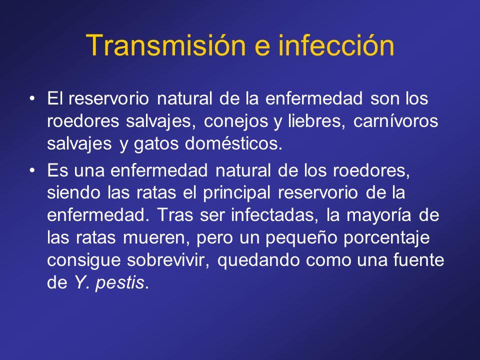 Transmisión e infección El reservorio natural de la enfermedad son los roedores salvajes, conejos y liebres, carnívoros salvajes y gatos domésticos. E