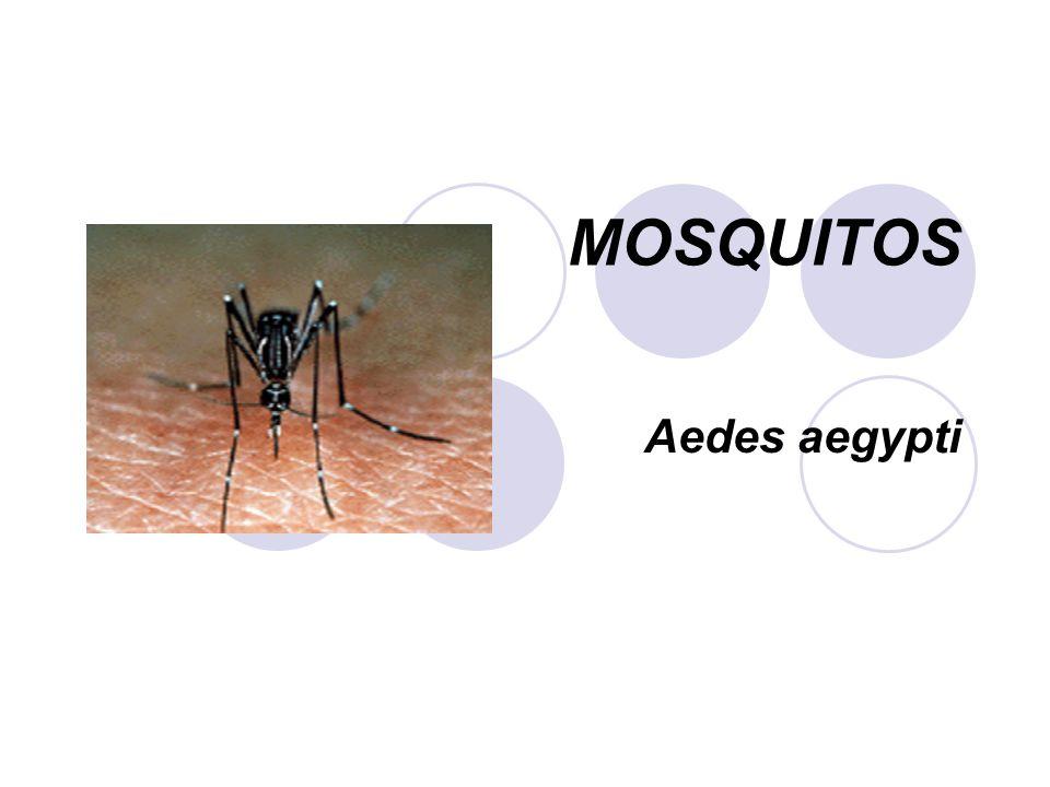 GENERALIDADES Mosquitos PHILUM: Artrópodos CLASE: Insecta ORDEN: Díptera FAMILIA: Culicidae SUBFAMILIA: Culicinae y Anophelinae GENEROS: Aedes, Culex y Anopheles