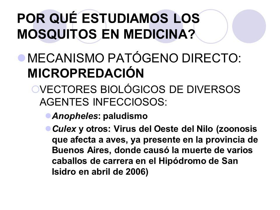 POR QUÉ ESTUDIAMOS LOS MOSQUITOS EN MEDICINA? MECANISMO PATÓGENO DIRECTO: MICROPREDACIÓN VECTORES BIOLÓGICOS DE DIVERSOS AGENTES INFECCIOSOS: Anophele