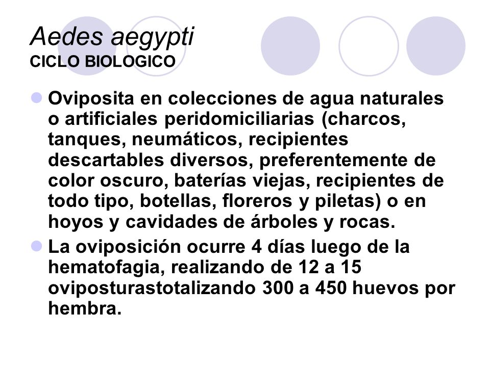 Aedes aegypti CICLO BIOLOGICO Oviposita en colecciones de agua naturales o artificiales peridomiciliarias (charcos, tanques, neumáticos, recipientes d