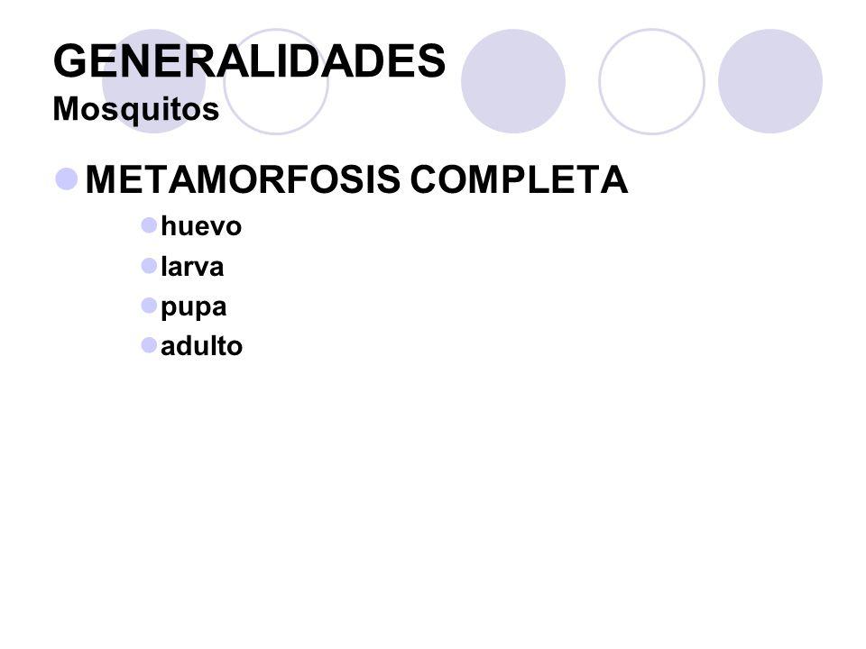 GENERALIDADES Mosquitos METAMORFOSIS COMPLETA huevo larva pupa adulto