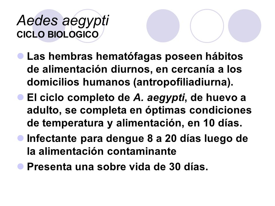 Aedes aegypti CICLO BIOLOGICO Las hembras hematófagas poseen hábitos de alimentación diurnos, en cercanía a los domicilios humanos (antropofiliadiurna