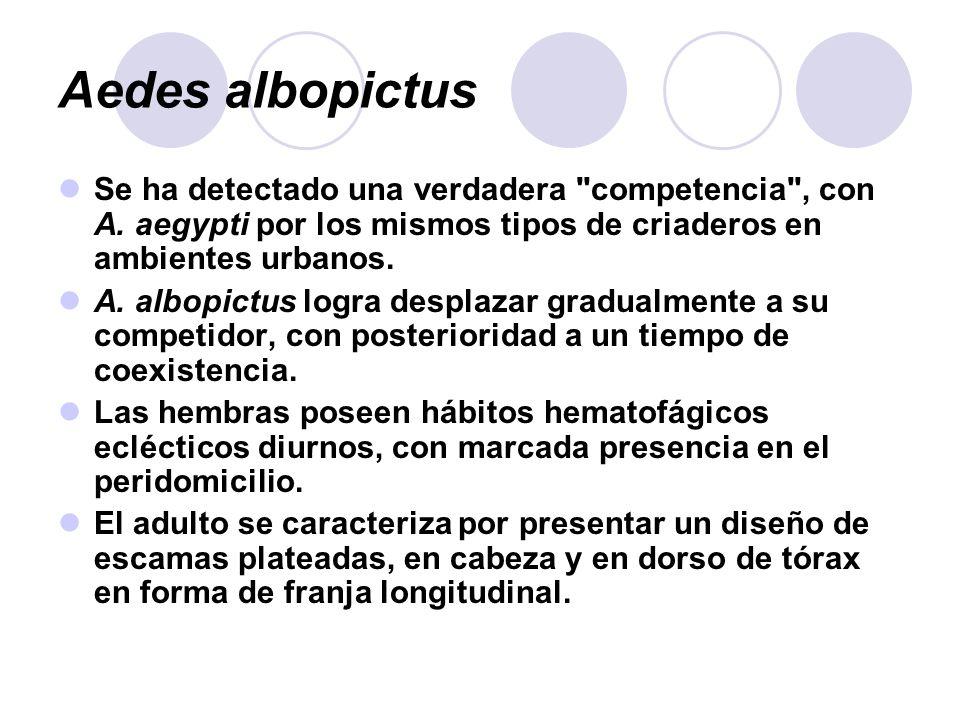 Aedes albopictus Se ha detectado una verdadera
