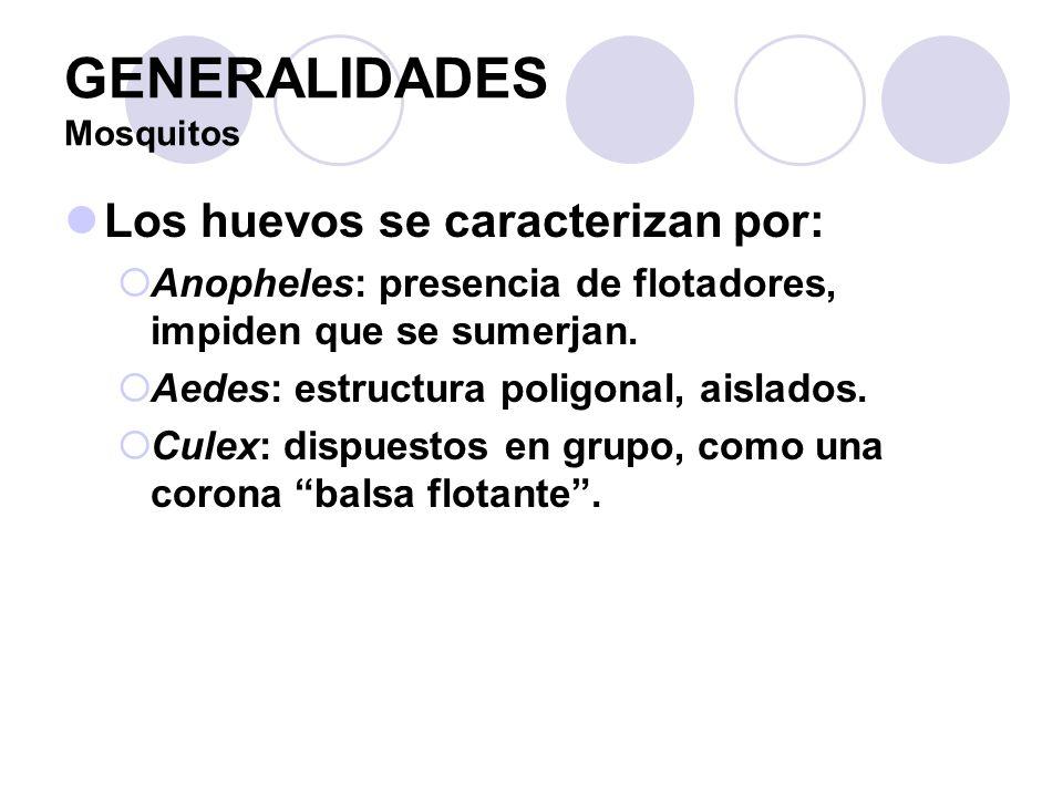 GENERALIDADES Mosquitos Los huevos se caracterizan por: Anopheles: presencia de flotadores, impiden que se sumerjan. Aedes: estructura poligonal, aisl