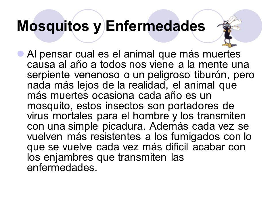 Mosquitos y Enfermedades Al pensar cual es el animal que más muertes causa al año a todos nos viene a la mente una serpiente venenoso o un peligroso t