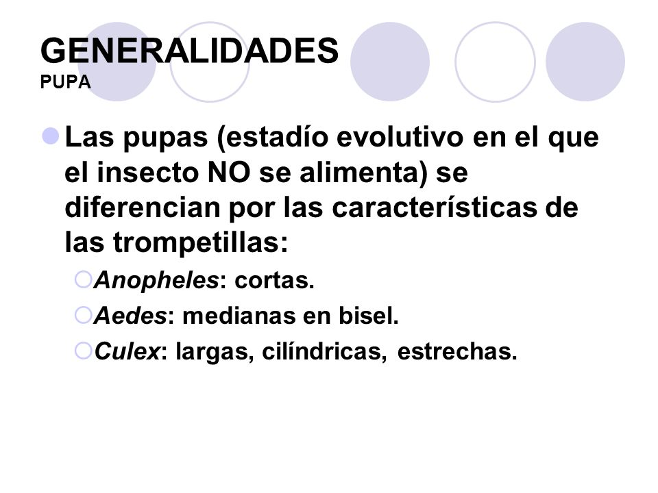 GENERALIDADES PUPA Las pupas (estadío evolutivo en el que el insecto NO se alimenta) se diferencian por las características de las trompetillas: Anoph