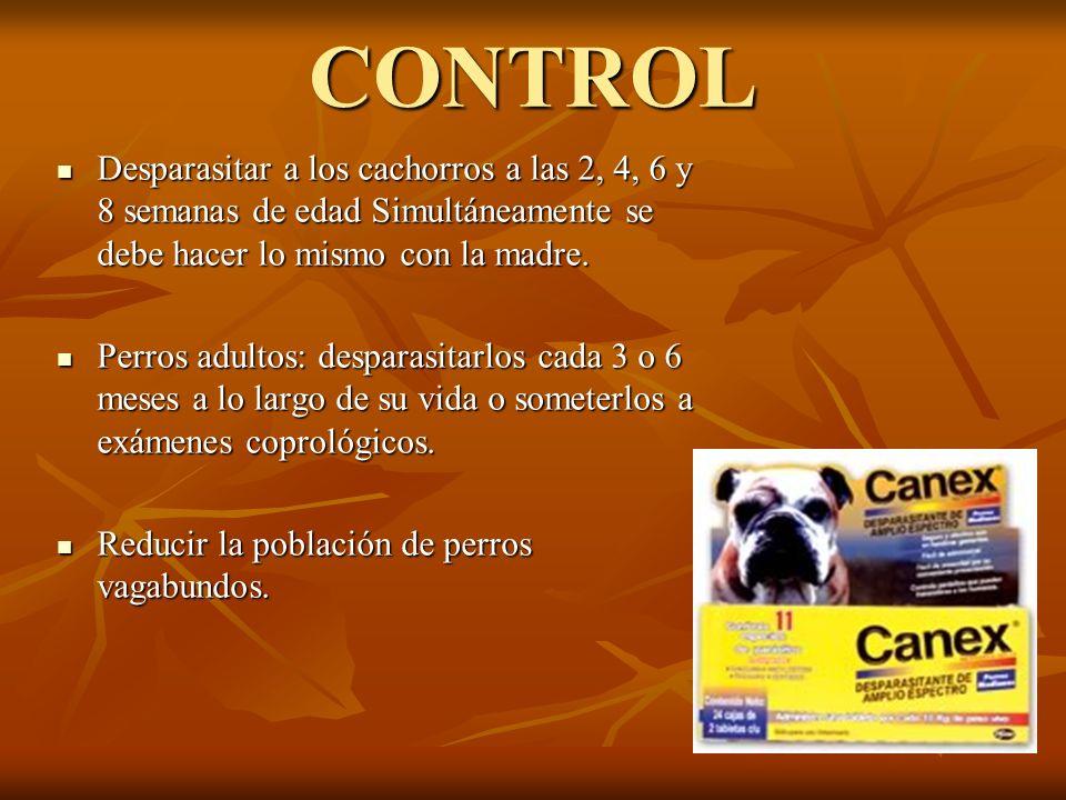 CONTROL Desparasitar a los cachorros a las 2, 4, 6 y 8 semanas de edad Simultáneamente se debe hacer lo mismo con la madre.