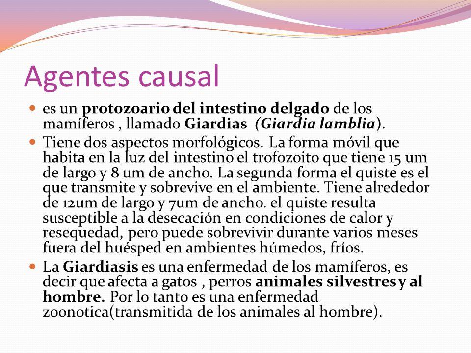 Agentes causal es un protozoario del intestino delgado de los mamíferos, llamado Giardias (Giardia lamblia). Tiene dos aspectos morfológicos. La forma