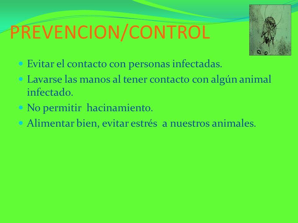 PREVENCION/CONTROL Evitar el contacto con personas infectadas. Lavarse las manos al tener contacto con algún animal infectado. No permitir hacinamient