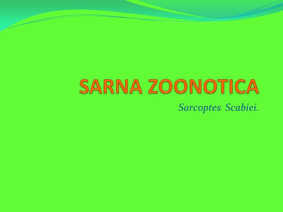 Sarcoptes Scabiei.