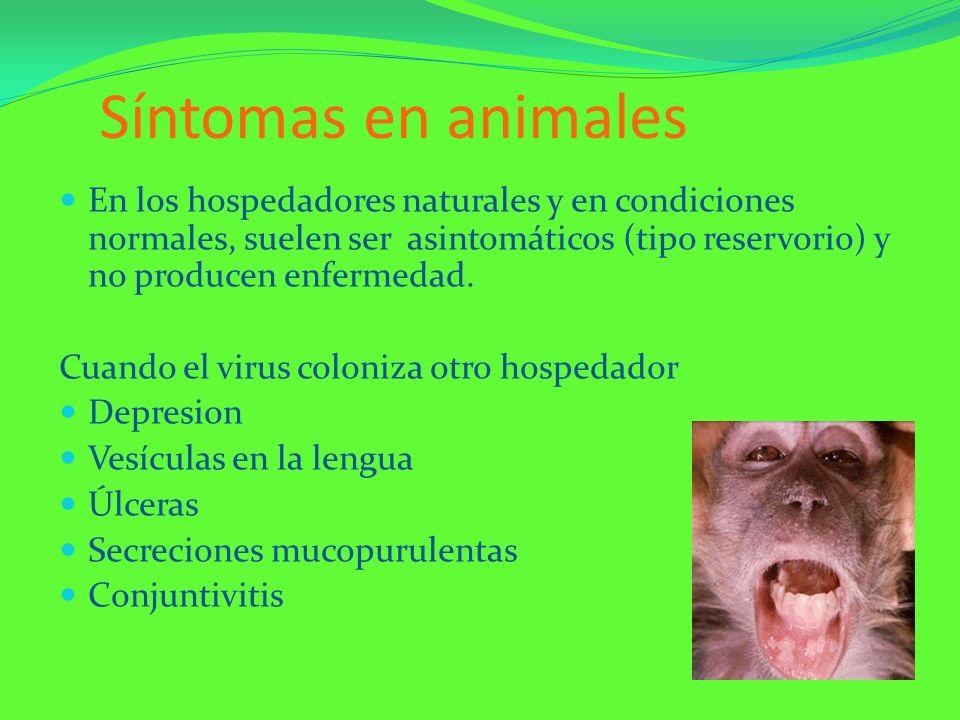 Síntomas en animales En los hospedadores naturales y en condiciones normales, suelen ser asintomáticos (tipo reservorio) y no producen enfermedad. Cua