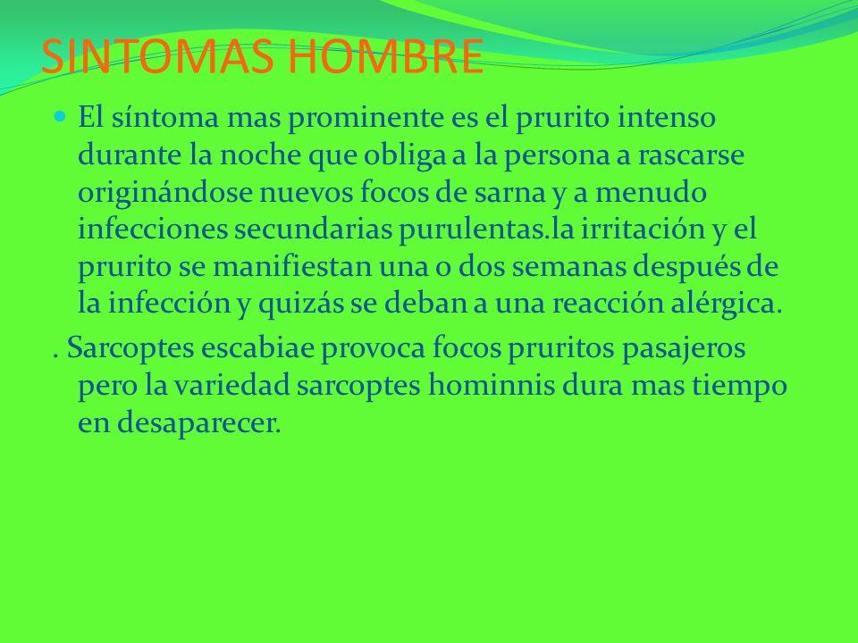 SINTOMAS HOMBRE El síntoma mas prominente es el prurito intenso durante la noche que obliga a la persona a rascarse originándose nuevos focos de sarna