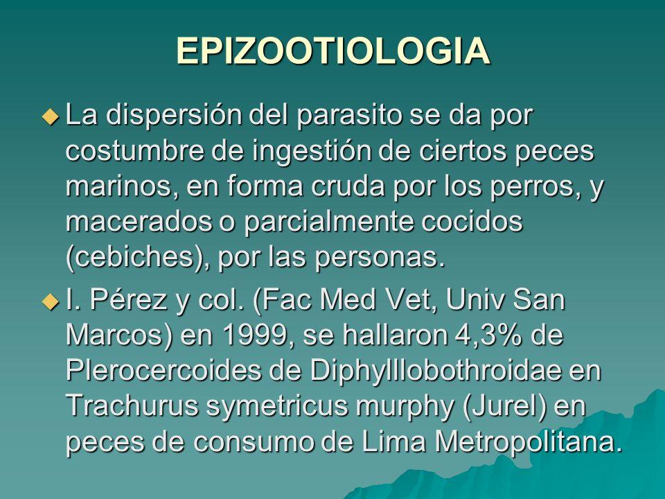 EPIZOOTIOLOGIA La dispersión del parasito se da por costumbre de ingestión de ciertos peces marinos, en forma cruda por los perros, y macerados o parc