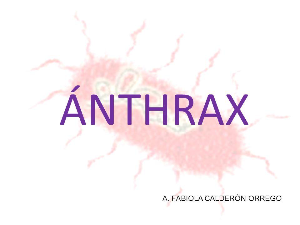 ÁNTHRAX A. FABIOLA CALDERÓN ORREGO