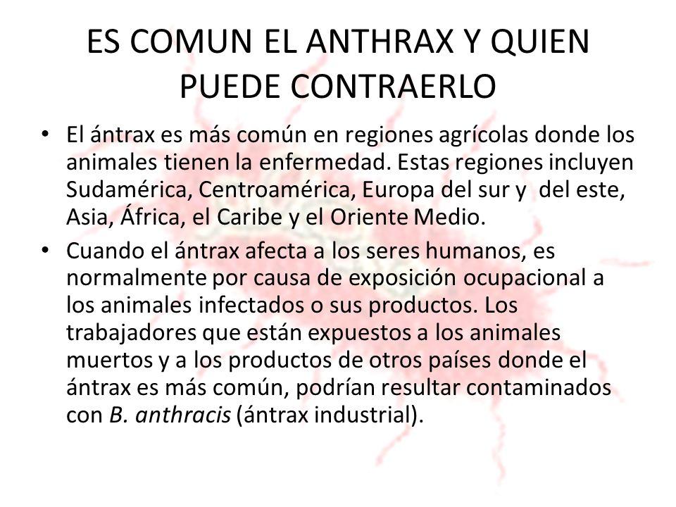ES COMUN EL ANTHRAX Y QUIEN PUEDE CONTRAERLO El ántrax es más común en regiones agrícolas donde los animales tienen la enfermedad. Estas regiones incl