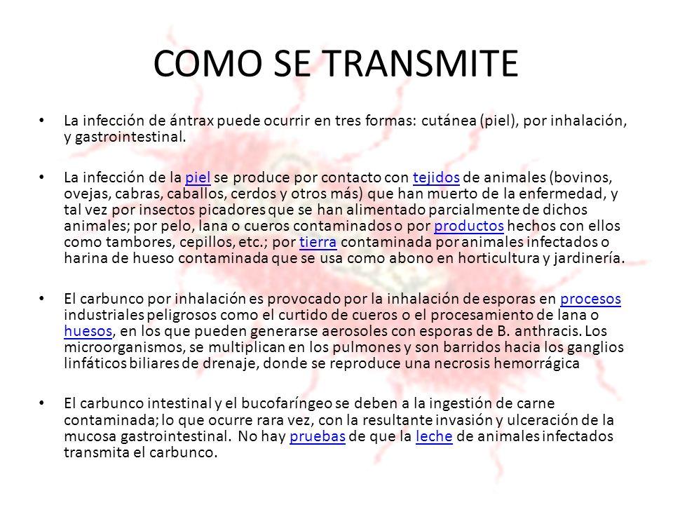 COMO SE TRANSMITE La infección de ántrax puede ocurrir en tres formas: cutánea (piel), por inhalación, y gastrointestinal. La infección de la piel se