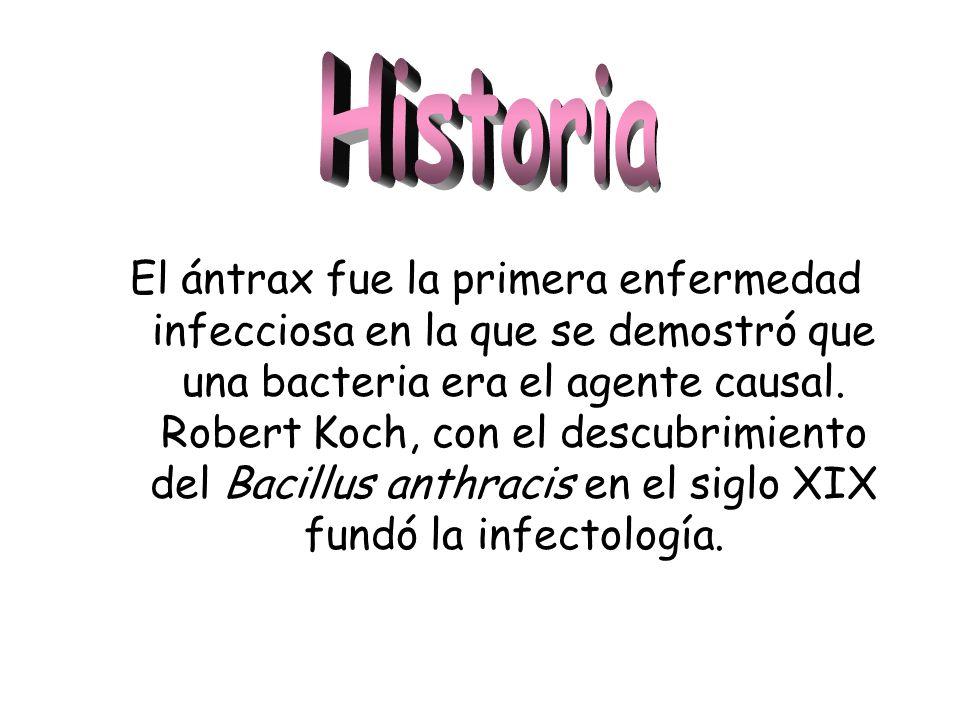 El ántrax fue la primera enfermedad infecciosa en la que se demostró que una bacteria era el agente causal. Robert Koch, con el descubrimiento del Bac