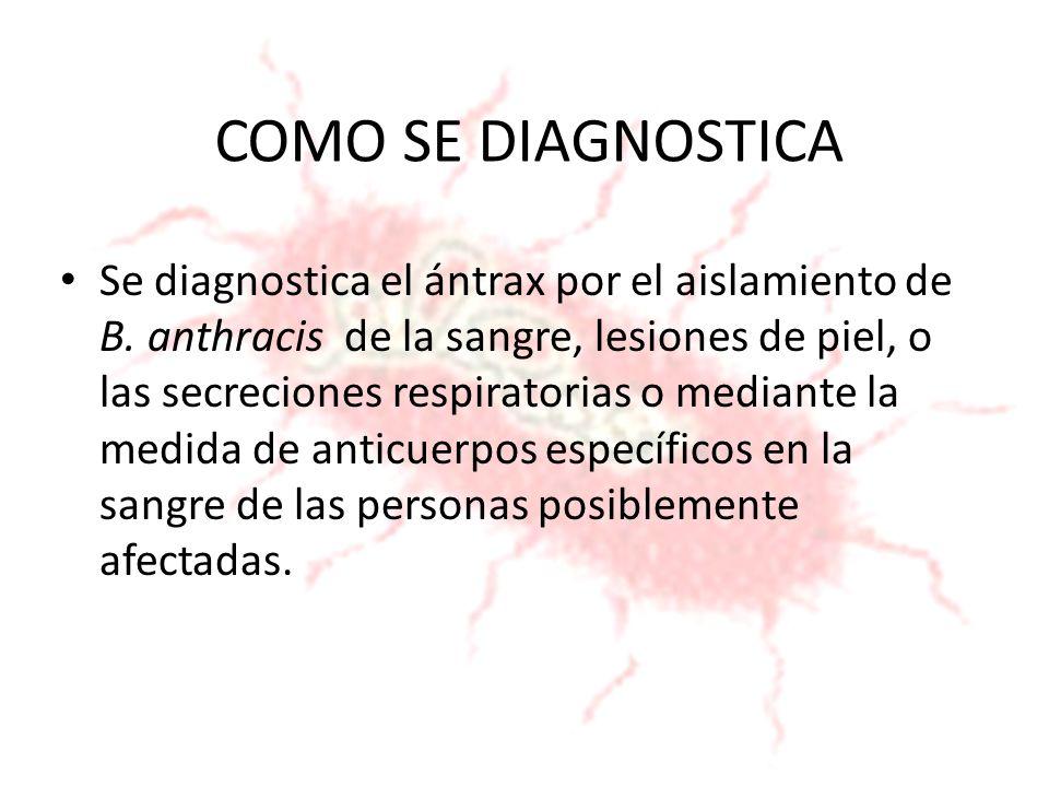 COMO SE DIAGNOSTICA Se diagnostica el ántrax por el aislamiento de B. anthracis de la sangre, lesiones de piel, o las secreciones respiratorias o medi