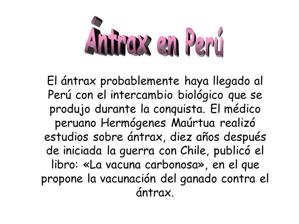 El ántrax probablemente haya llegado al Perú con el intercambio biológico que se produjo durante la conquista. El médico peruano Hermógenes Maúrtua re