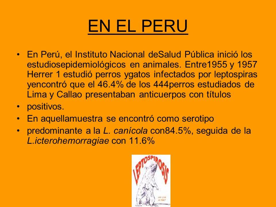 EN EL PERU En Perú, el Instituto Nacional deSalud Pública inició los estudiosepidemiológicos en animales. Entre1955 y 1957 Herrer 1 estudió perros yga